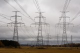 """Wildlife Worldwide Impacted By The """"Flashing"""" Of PowerLines"""